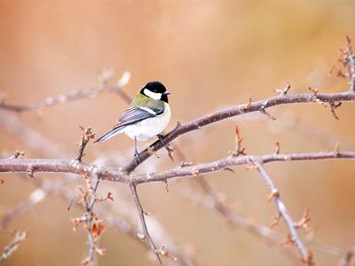 bird129